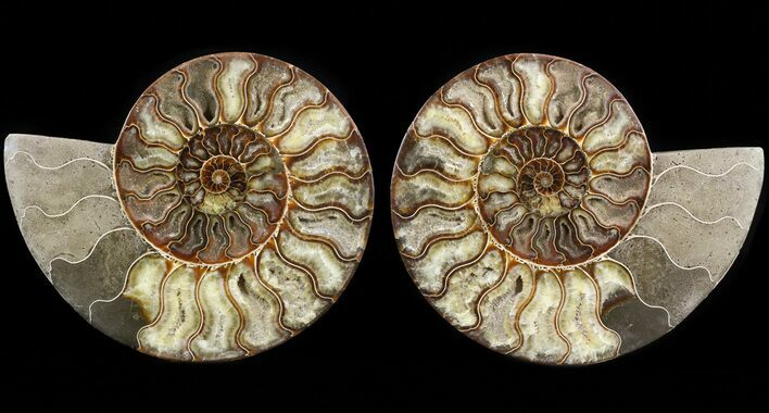 "8.7"" Cut & Polished Ammonite Pair - Agatized"