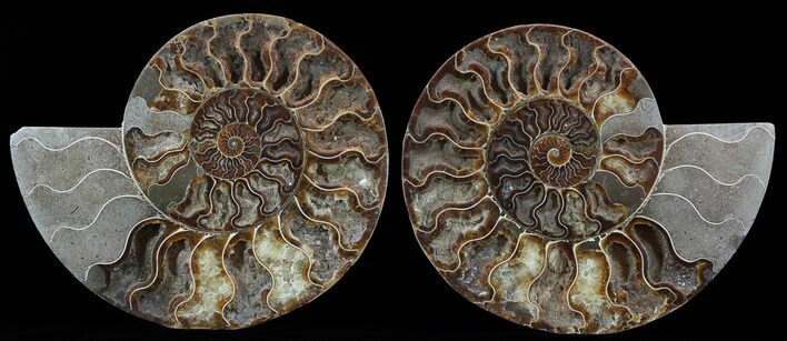 "8.9"" Cut & Polished Ammonite Pair - Crystal Pockets"