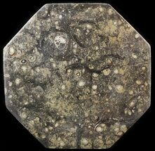 "13.5"" Octagon Shaped Tray/Platter with Orthoceras & Goniatite Fossils For Sale, #53102"