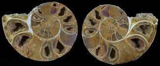 "3.6"" Cut & Polished, Agatized Ammonite Fossil - Jurassic For Sale, #53798"