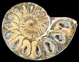 "Buy 3.3"" Sliced, Agatized Ammonite Fossil (Half) - Jurassic - #54031"