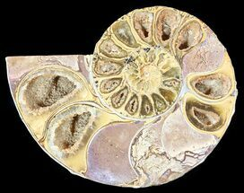 "3.7"" Sliced, Agatized Ammonite Fossil (Half) - Jurassic For Sale, #54038"