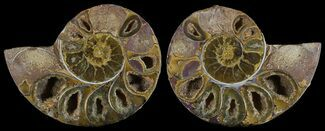 "Buy 3.6"" Cut & Polished, Agatized Ammonite Fossil - Jurassic - #53812"