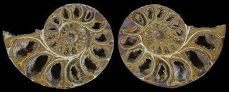"Buy 3.4"" Cut & Polished, Agatized Ammonite Fossil - Jurassic - #53824"