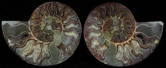 "5.5"" Polished Ammonite Pair - Agatized For Sale, #54320"