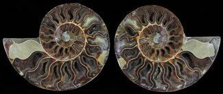 "Buy 5.3"" Polished Ammonite Pair - Agatized - #54331"