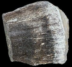 Buy Polished Pliosaur (Liopleurodon) Bone - England - #53440