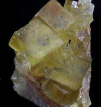 "1.9"" Lustrous, Yellow Cubic Fluorite Crystals - Morocco  For Sale, #37481"