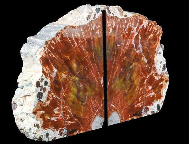 "7.8"" Tall Arizona Petrified Wood Bookends - Red, Orange, Yellow"