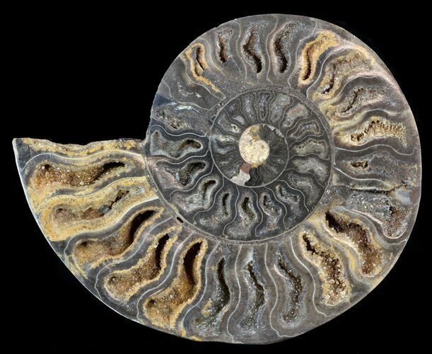 "4.6"" Split Black/Orange Ammonite (Half) - Unusual Coloration"