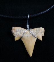Fossil Otodus Shark Tooth Necklace For Sale, #4955