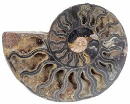 "3.3"" Split Black/Orange Ammonite (Half) - Unusual Coloration For Sale, #55649"