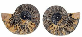 "Buy 3.8"" Split Black/Orange Ammonite Pair - Unusual Coloration - #55600"