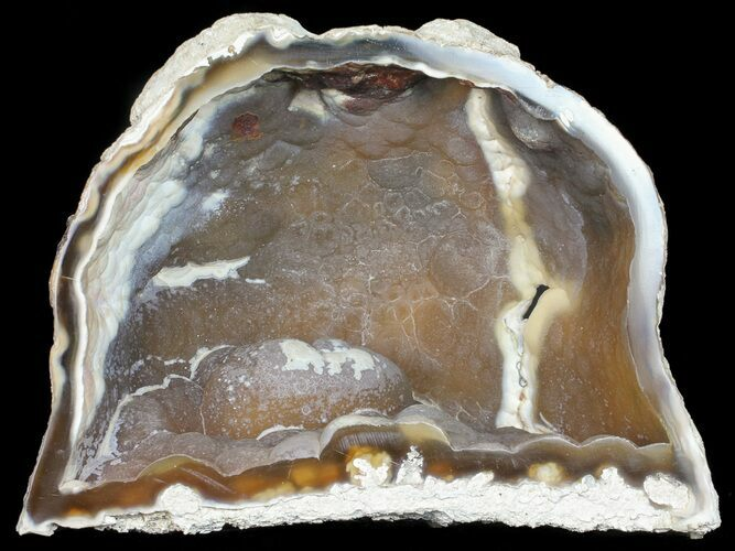 "5.6"" Agatized Fossil Coral (Botryoidal Chalcedony) - Florida"