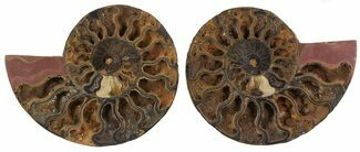 "Buy 6.1"" Split Black/Orange Ammonite Pair - Unusual Coloration - #55729"