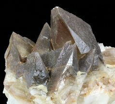 Calcite - Fossils For Sale - #57384