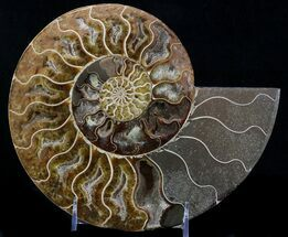 "9"" Cut Ammonite Fossil (Half) - Beautifully Agatized For Sale, #58280"