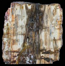 "10.7"" Colorful Petrified Wood Slab - Madagascar For Sale, #58817"