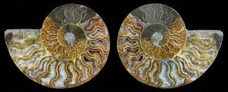 "3.6"" Polished Ammonite Pair - Agatized For Sale, #59432"
