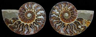 "3.2"" Polished Ammonite Pair - Agatized For Sale, #59465"
