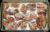 Wholesale Lot: Quality Vanadinite Crystals on Barite - 17 Pieces - #59967-1