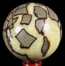 Septarian - Fossils For Sale - #60525