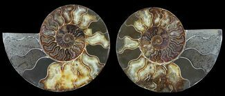 "Buy 6"" Cut & Polished Ammonite Pair - Agatized - #47713"