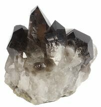 Quartz var Smoky - Fossils For Sale - #61485
