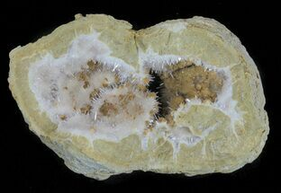 Aragonite & Kutnohorite - Fossils For Sale - #61770
