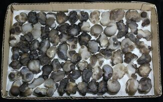 Natural Chalcedony Nodules (Wholesale Lot) - 83 Pieces For Sale, #61820