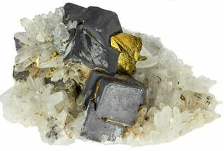 "Buy 2.5"" Galena, Chalcopyrite and Quartz Crystal Cluster - Bulgaria - #62248"