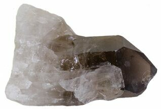"Buy 2.3"" Smoky Quartz Crystal - Brazil - #61456"