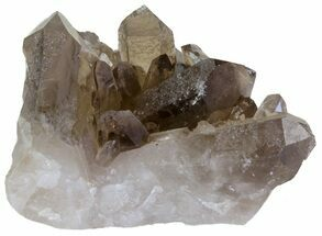 "Buy 2.7"" Smoky Quartz Crystal Cluster - Brazil - #61465"