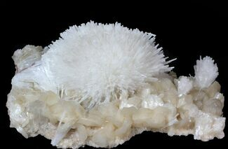 "Buy 4.8"" Scolecite (Zeolite) Sprays on Stilbite  - Maharashtra, India - #63001"