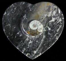"Buy 4.5"" Heart Shaped Fossil Goniatite Dish - #61303"