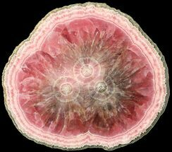 Rhodochrosite & Pyrite - Fossils For Sale - #63153