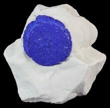 "1.35"" Brilliant Blue Azurite Sun On Rock - Australia For Sale, #63248"