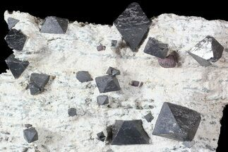 "Buy 4"" Octahedral Magnetite Crystals In Rock - Australia - #63328"