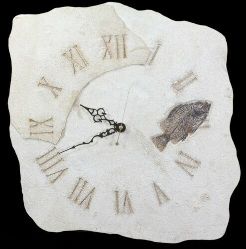 "14"" Tall Clock With Cockerellites Fish Fossil - Wyoming"