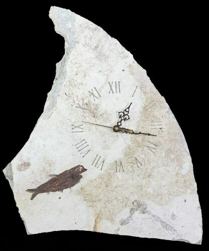 "20"" Tall Clock With Natural Fossil Fish - Wyoming"