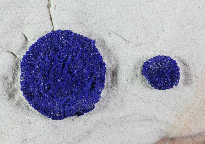 ".5"" Brilliant Blue Azurite Suns On Rock - Australia"