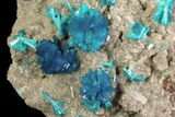 Vibrant Blue Cavansite Clusters on Stilbite - India - #64817-2