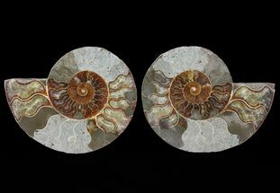 "Buy 5.5"" Cut & Polished Ammonite Pair - Agatized - #64930"