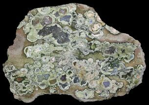 Polished Rhyolite (Rainforest Jasper) Slab - Australia For Sale, #65354