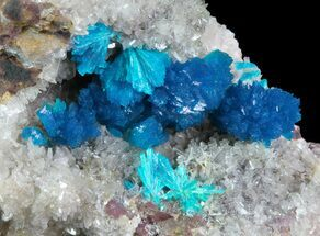 Vibrant Blue Cavansite Clusters on Stilbite - India For Sale, #64799