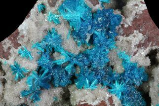Buy Vibrant Blue Cavansite Clusters on Stilbite - India - #64801