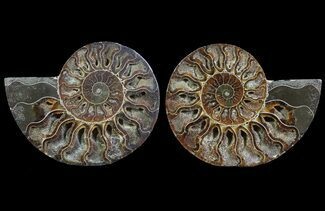 "4.5"" Cut & Polished Ammonite Pair - Agatized For Sale, #64967"