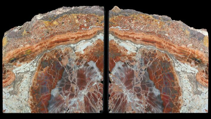 "7.1"" Tall, Colorful, Arizona Petrified Wood Bookends"