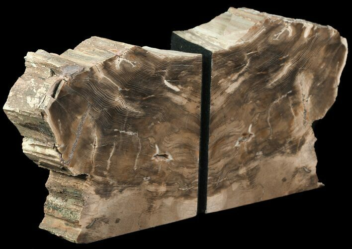 "5.5"" Petrified Wood Bookends - Oregon"