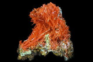Crocoite - Fossils For Sale - #64329